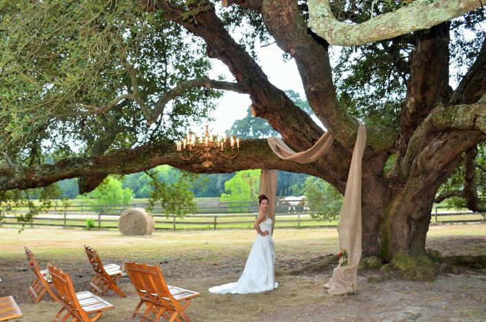 [Image: wedding tree]